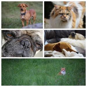 Hund und Katze, Tiefenmühle